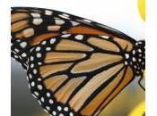L'effet papillon, comment petits changements peuvent vous faire passer l'échecs succès