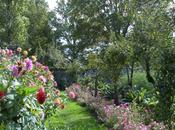 fleurs potager