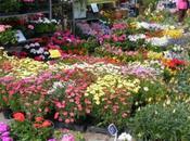 visite Marché fleurs Grand' Place.