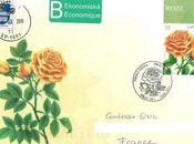 Jolie rose lettone