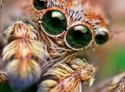 Webmasters, voici quoi ressemble votre site quand araignée regarde