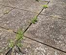 Désherbant Naturel pour petites herbes folles...