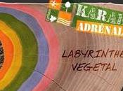 Karaëz Adrénaline. labyrinthe végétal coeur Bretagne