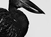 oiseaux Sens Emmanuel Berry