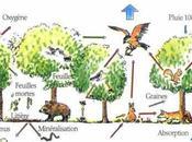 Exemples d'écosystèmes