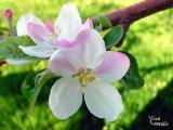 fleurs l'Âme Bach dans quotidien