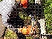 Inquiétudes l'abattage centaines d'arbres Pré-Saint-Gervais