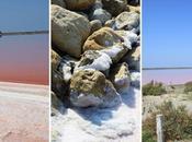 découverte fleur sel: Saunier Camargue