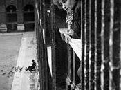 Chiens aboient Truman Capote. Rose Blanche. Rencontre avec Colette
