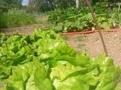 Elle n'ira prison pour avoir fait pousser légumes