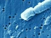 Klebsiella pneumoniae: souche ultrarésistante mais mortelle Infections nosocomiales