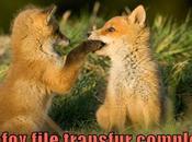 Mozilla nous offre version finale Firefox