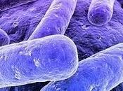 Allergie origine bactérienne liée lieu naissance