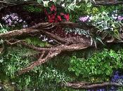 plantes murs retour...