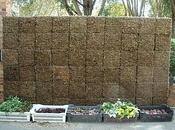 Tiens regarde, plantes murs