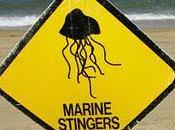 Australie pratique: dangers baignade dans Queensland ailleurs