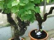 Pot crayons fleuri paperblog - Pied de vigne en pot ...