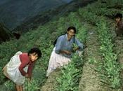 Bolivie s'attaque enfin drogue