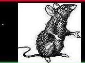 Libye nouveau business renégats Benghazi