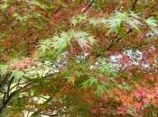 Leçon japonaise plaisir suivre saisons