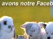 réseaux sociaux pour animaux compagnie