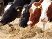 Santé nouveau virus attaque bétail français