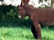 L'âne Poutou