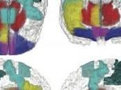 DROGUES: ados tous égaux face l'expérimentation Nature Neuroscience