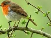 Fête Nature 2012 partez rencontre oiseaux dans Parcs Nationaux Français