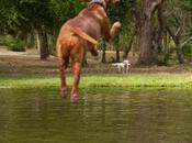 Baignades chiens attention cyanobactéries