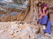 L'Ygdrassil berbère était olivier
