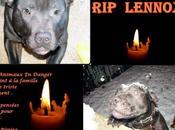 Lennox chien assassiné pour délit sale gueule!