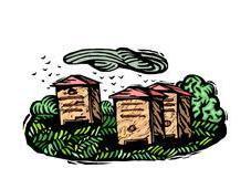 Quel type population trouve-t-on dans ruche