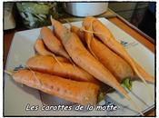 Gratin carottes lait coco curry