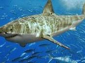 Requin sens d'une machine tuer