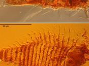 Trois petits insectes piégés dans gouttes d'ambre