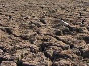 sécheresses, famines marchés