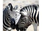 animaux d'Etosha