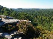 bosses, Forêt Trois Pignons, Fontainebleau