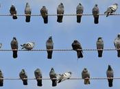 entrepreneurs pigeons grève