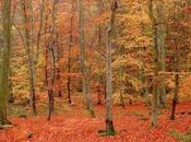 L'automne d'un poète Jean Mambrino