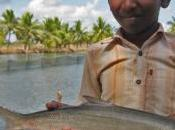 NUTRITION: Trop poisson, trop méthylmercure, risques pour cerveau ZMWG