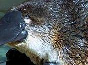 complexe l'ornithorynque faire quand sent l'écart