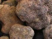 Messe truffes Richerenches, Vaucluse Provence