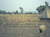 Réforme foncière Bénin pourquoi l'échec