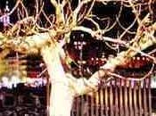 veux lâcher branche arbre palabres
