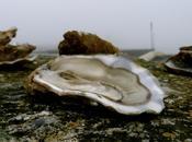 L'image quinzaine n°20 Reprendrez-vous huîtres