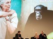 Disneynature Chimpanzés Découvrez photos l'avant-première Grand hier!