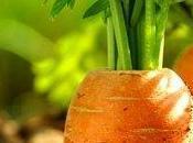 L'ecologie dans votre jardin