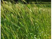 variétés paysannes voie de...